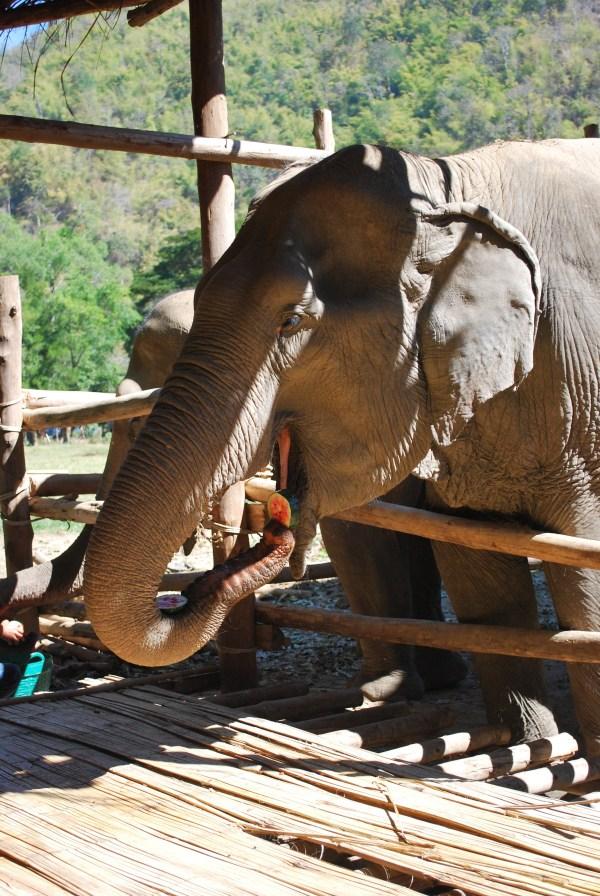 Thailand 447