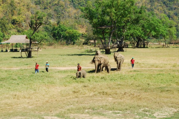 Elephants and their mahouts at Elephant Nature Park