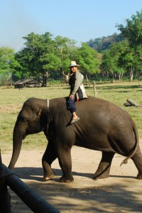 Thailand 680