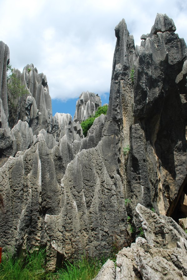 Stone Forest (32)