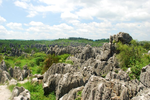 Stone Forest (69)