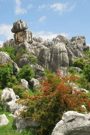 Stone Forest (79)