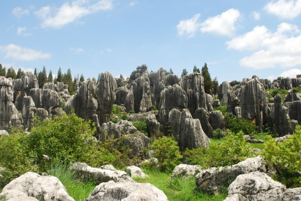 Stone Forest (80)